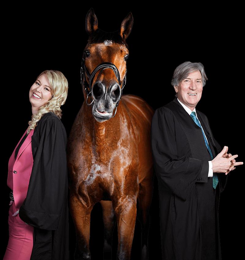 Pferd Westküstenkanzlei Rechtsanwalt Rechtsanwälte Anwalt Anwälte Heide Notar